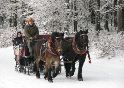 Pferdeschlittenfahrt im Winter in Frauenwald | Foto: Reiterhof Rosenberger