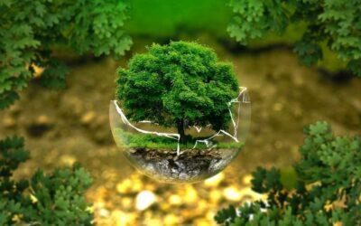 Nachhaltigkeit: Regionalbudget für Modellregionen Ilm-Kreis und Kyffhäuserkreis